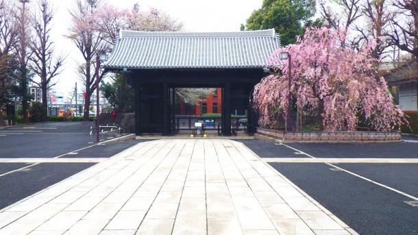 上野 寛永寺  旧本坊表門